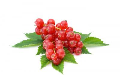 Red currant aroma